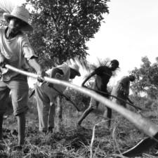 Milieu rural haïtien : « Si ce n'était pas la solidarité…»